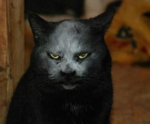 Cuentos de Terror: El Gato Misterioso