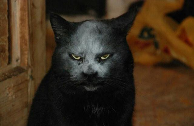cuento de terror el gato tenebroso